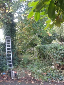 taking down a tree in whalley range