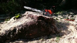 massive stump