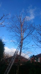 Birch reduction with small pruning cuts