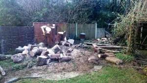 a lot of logs