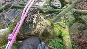 decaying limb