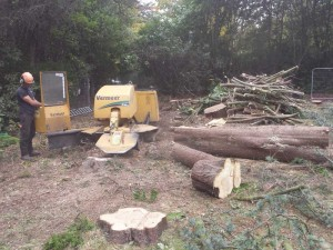 using the large stump grinder